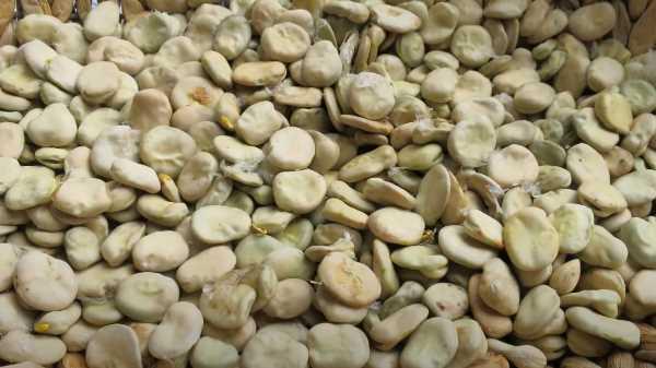 Как и сколько варить бобы
