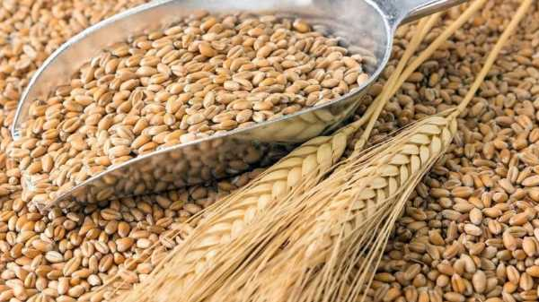 Как и сколько варить пшеницу