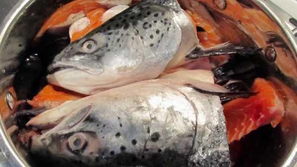 Как и сколько варить рыбьи головы