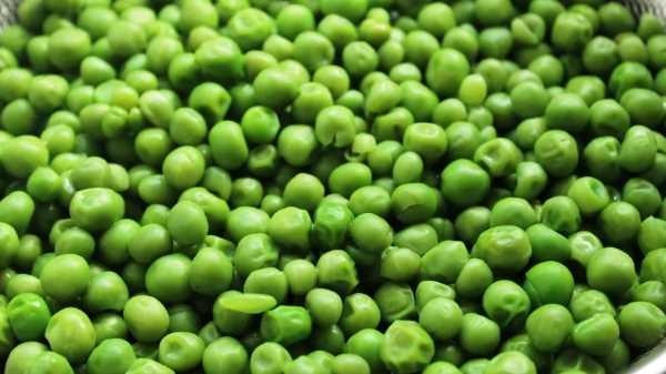 Как и сколько варить зеленый горошек