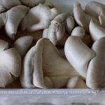 Как вкусно приготовить грибы вешенки